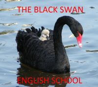 The Black Swan English School